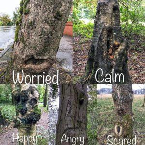 Tree Emotions