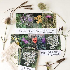 Wildflower Flashcards